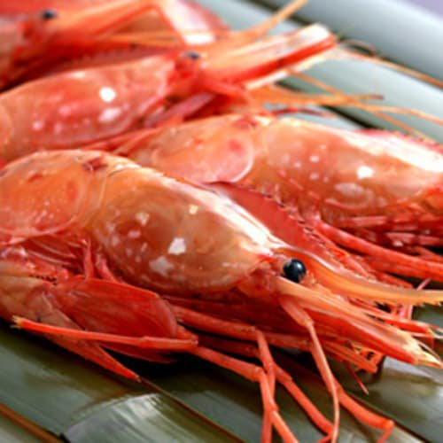 刺身用ボタンエビ(大)1kg