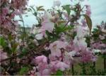 その他のブログ 花を愛でてみました