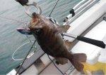 【車種から】ハイエースに関するブログ GW海釣り&車中泊レポート