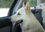 【車種から】ハイエースに関するブログ 大型犬とドライブに欠かせないバグネット(ハイエース網戸)