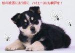 【車種から】ハイエースに関するブログ 犬の蚊対策にハイエース網戸