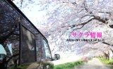 【車種から】ハイエースに関するブログ 春のアウトドアーお花見時期のレジャーはどうする?