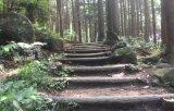 【車種から】ハイエースに関するブログ 紫峰杉に圧倒されます
