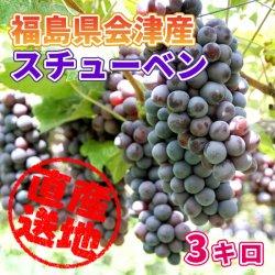 【極上のフルーツセレクション】会津産 葡萄(品種:スチューベン)  約3kg 小森ぶどう園のおいしい葡萄 産地直送もぎたてをお届けし…