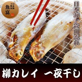 【日本海産】柳カレイ一夜干(大サイズ1尾)