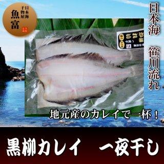 【日本海産】黒柳カレイ干物 2〜5枚入り