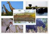 テラウチマサトポストカード「アフリカ」