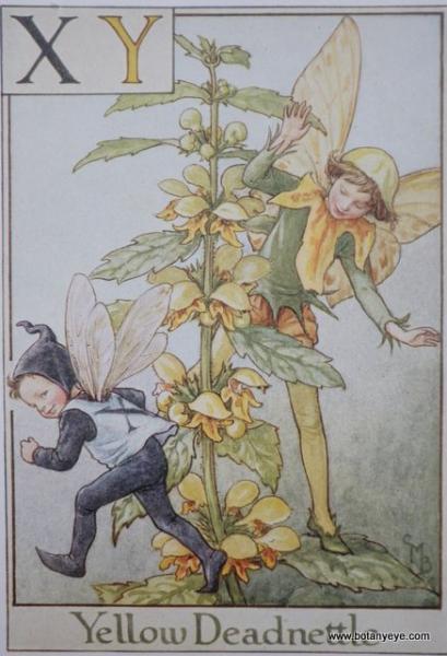 『XY』 Yellow Deadnettle Fairy ツルオドリコソウの妖精