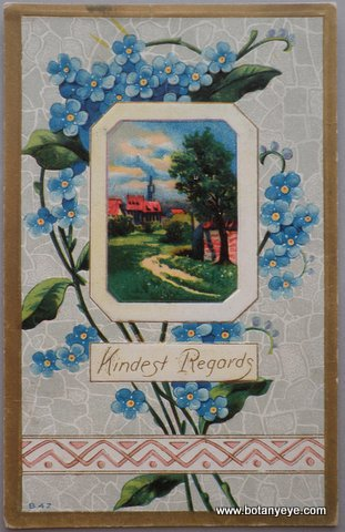 ワスレナグサと風景  - Kindest Regards -