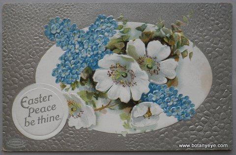 わすれなぐさのクロスと白い花 - Easter Peace be Thine  -