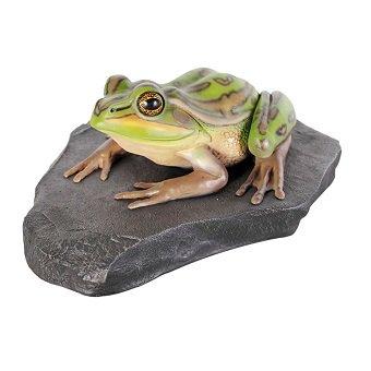 蛙 かえる☆岩の上でくつろぐキンスジアメガエルのビッグオブジェ【54cm】