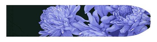 青のパウスカートケース トーチジンジャー大柄 pcase-2776BLBK【メール便可】★オーダーメイド