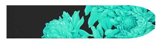 ヒスイ色と黒のパウスカートケース トーチジンジャー大柄 pcase-2776JDBK【メール便可】★オーダーメイド