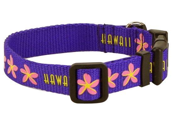 犬用首輪 紫 Sサイズ DogCollars-PP_S
