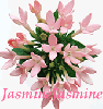 Heavenly Jasmine ヘヴンリー・ジャスミン 5ml