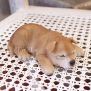 <B>【即納可!】</B>犬のオブジェ ベビードッグ・いねむり豆柴<img class='new_mark_img2' src='https://img.shop-pro.jp/img/new/icons57.gif' style='border:none;display:inline;margin:0px;padding:0px;width:auto;' />