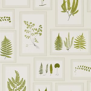 輸入壁紙<b>【WOODLAND WALK WALLPAPERS】</b>Sanderson 英国「Fern Gallery」(68.6cm巾×10m巻)