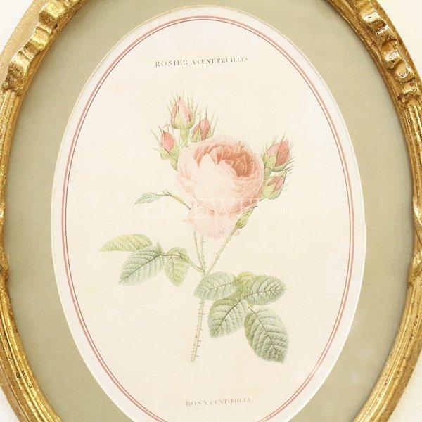 【即納可!】額絵「薔薇」オーバルフレーム(W22.7×H32.5cm)