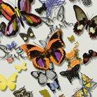 輸入壁紙<b>【フランス・Christian Lacroix】</b>Butterfly Parade オフホワイト系 52cm巾×10.05m巻