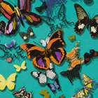 輸入壁紙<b>【フランス・Christian Lacroix】</b>Butterfly Parade グリーン系 52cm巾×10.05m巻