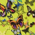 輸入壁紙<b>【フランス・Christian Lacroix】</b>Butterfly Parade イエロー系 52cm巾×10.05m巻