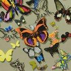 輸入壁紙<b>【フランス・Christian Lacroix】</b>Butterfly Parade ベージュ系 52cm巾×10.05m巻