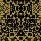 輸入壁紙<b>【フランス・Christian Lacroix】</b>Santo Sospir ゴールド×ブラック系 52cm巾×10.05m