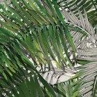 輸入壁紙<b>【フランス・Christian Lacroix】</b>ジャングル柄 Croisette グリーン系 45cm巾×24m巻