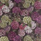 ≪国内在庫品≫輸入ファブリック<b>【イギリス・DESIGNERS GUILD】</b>madhuri Sudara 紫陽花 Damson 137cm巾×1m巻