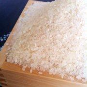 【令和2年産】コシヒカリ 玄米 25kg 新米