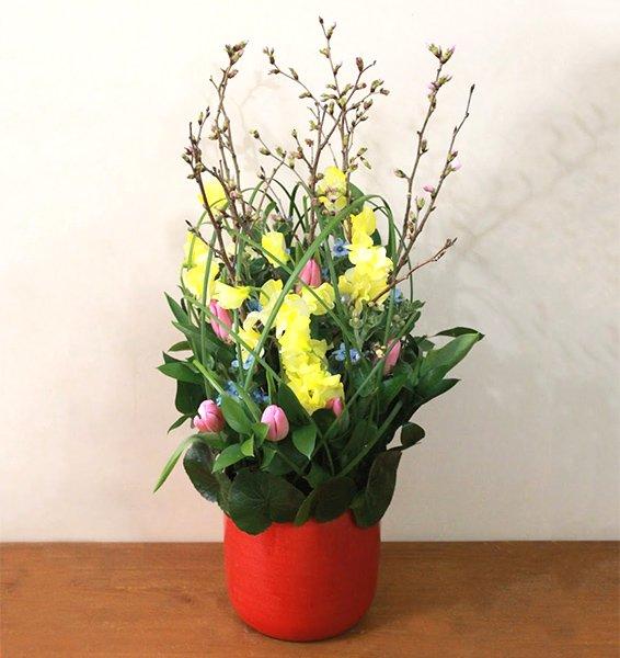 春を待つ桜のアレンジメント [開店祝い/...