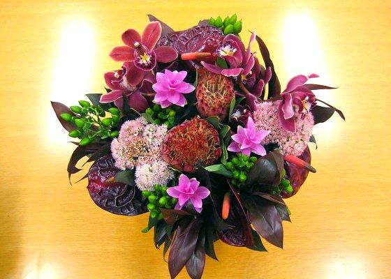 《お祝い花》プロテアとセダムの大人シックな花ギフト(M)【陶器鉢】[開店祝い/個展/誕生日]